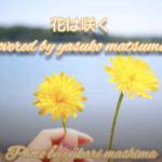 花は咲く-歌詞付き‐covered by 松本やすこ photo by真島由佳里【松本やすこ愛唱曲2013より】